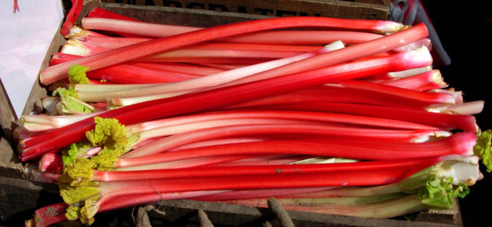 Rhubarb_for_sale_in_Amsterdam